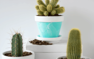 How To Care For Cactus Houseplants