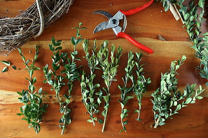 How to Make a Boxwood Wreath - clippings.