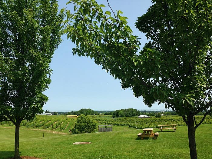 Tawse grounds and vineyard