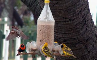 DIY Bird Trays as Party Favours