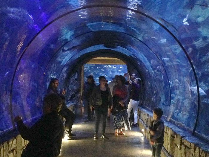 Shark Reek Tunnel - Las Vegas