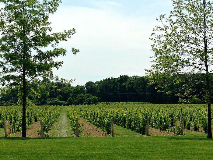 winery field - NOTL