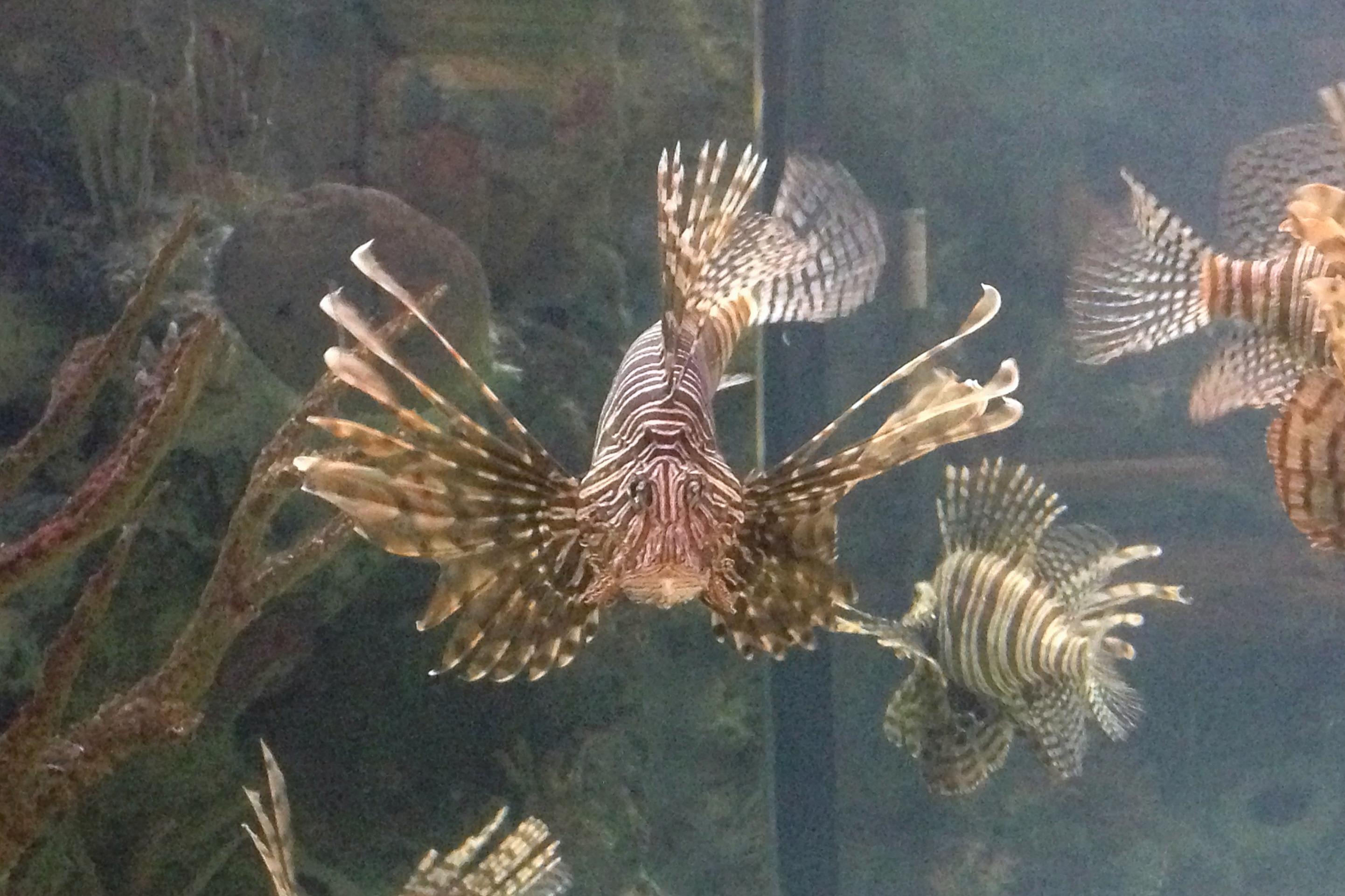 Shark Reef - Las Vegas - Fish