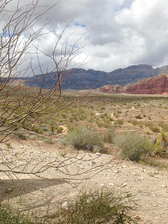 Red Rock View - Desert