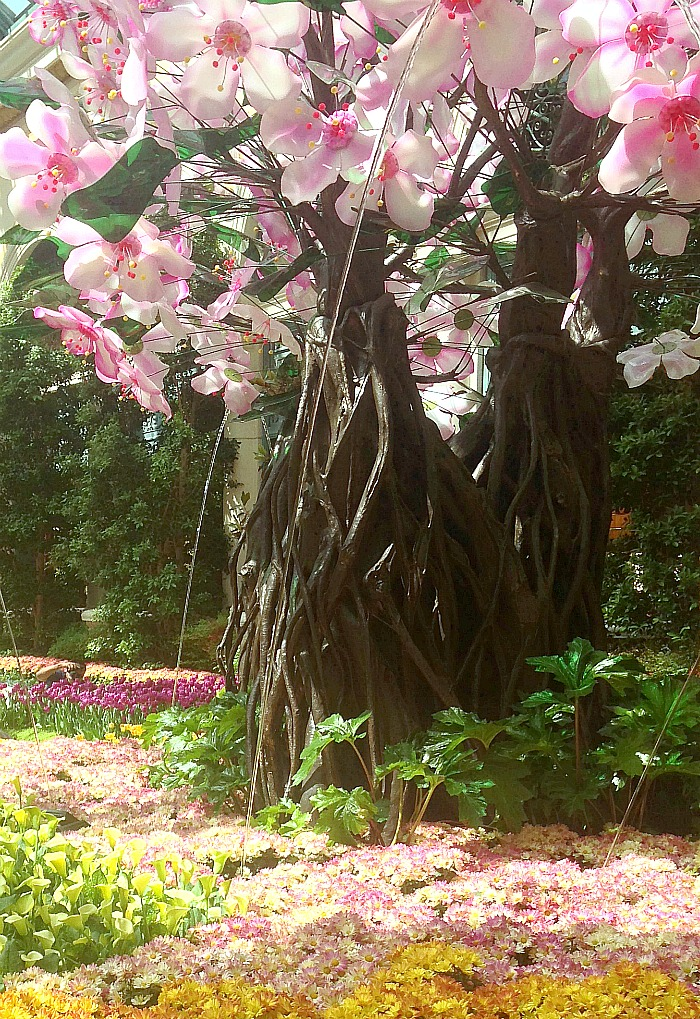 Botanical Garden - Las Vegas - Tree
