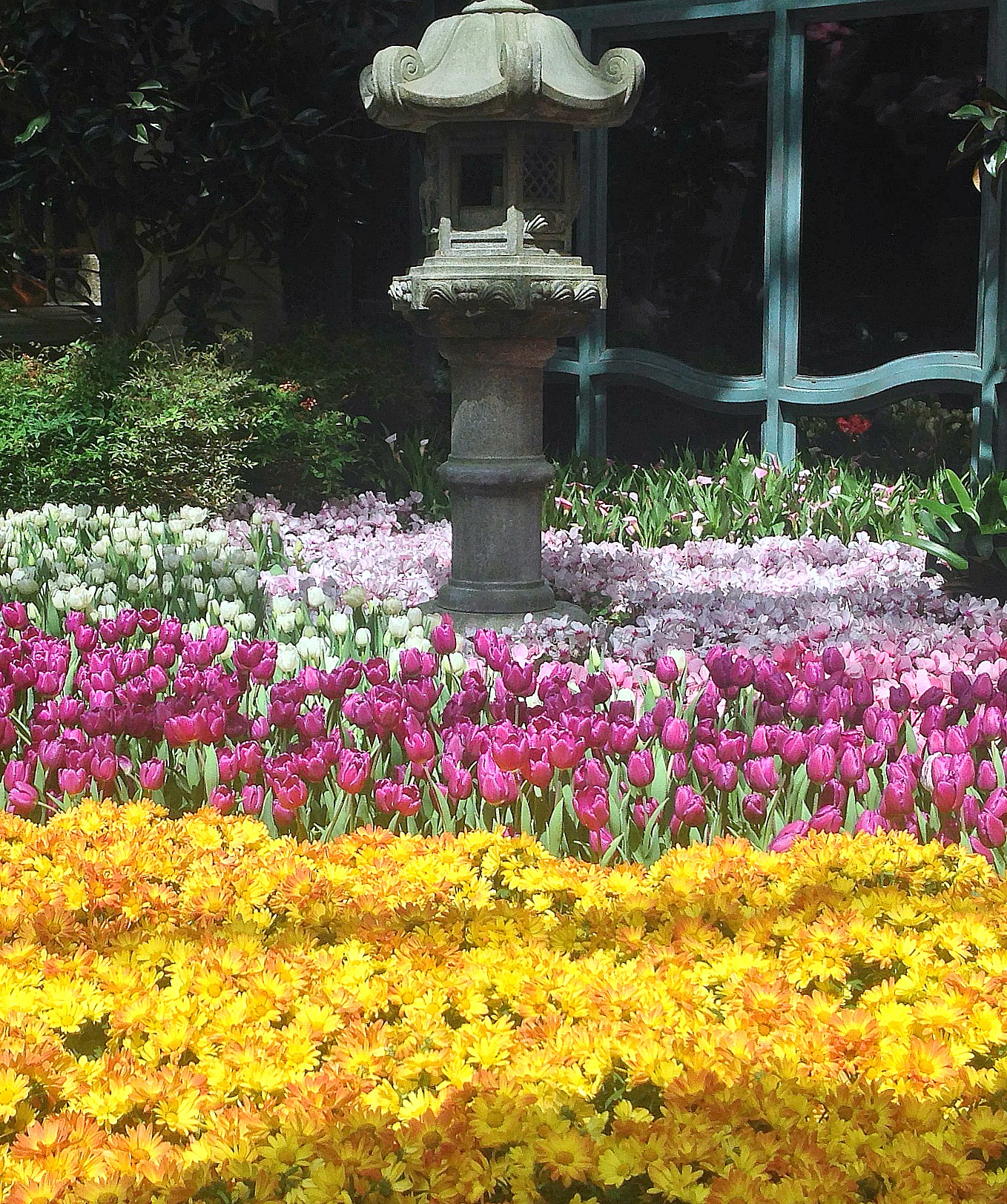 Botanical Garden - Las Vegas - Tulips