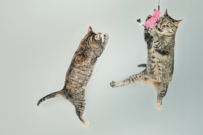 Flying Cats